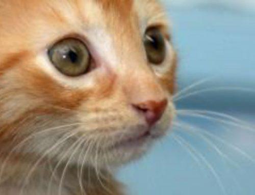 New Kitten Primer