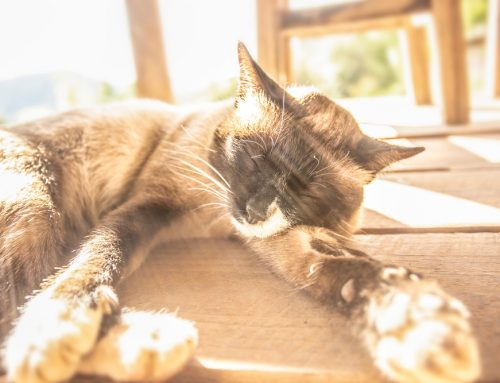 7 Ways to Protect Your Pet This Summer