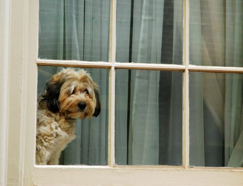 What If This Time It's Forever?—Canine Separation Anxiety